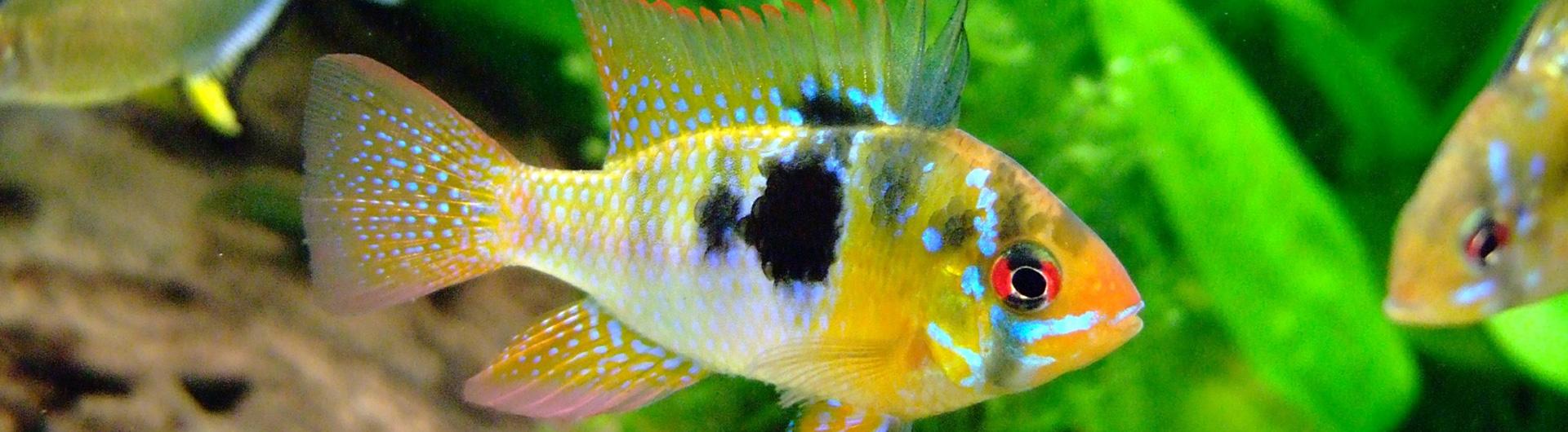 Tierparadies Güdden - Aquaristik