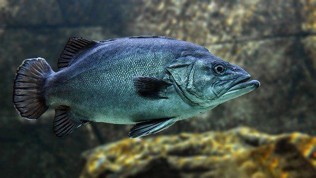 Barf - Fisch